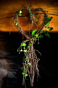 Ivy in heart shape, United Kingdom, Europe