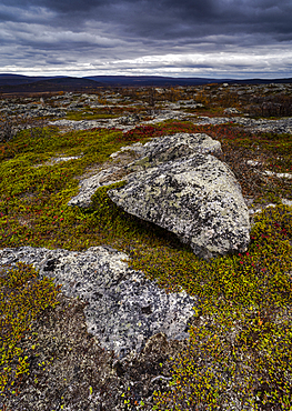 Lichen covered rocks on high fell, Kilpisjarvi, Lapland, Finland, Europe
