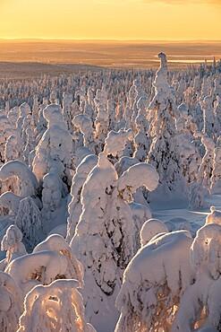 Snow covered winter landscape at sunset, tykky, Kuntivaara, Kuusamo, Finland, Europe