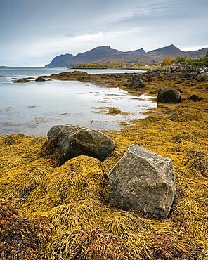 Coastline at low tide, west Senja, Norway, Scandinavia, Europe