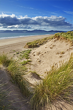 Sand dunes on Rossbeigh beach, Ring of Kerry, County Kerry, Munster, Republic of Ireland, Europe