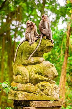 Monkeys in the Sacred Monkey Forest, Ubud, Bali, Indonesia, Southeast Asia, Asia