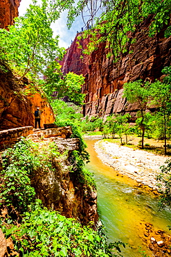 The Narrows Canyon Trail, Zion National Park, Utah, United States of America, North America
