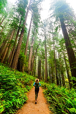 Woman exploring Mount Shasta Forest, California, United States of America, North America