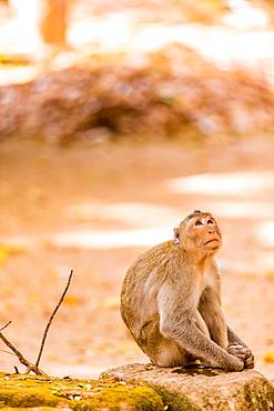 Wildlife inside Angkor Wat temples, Angkor, Siem Reap, Cambodia, Indochina, Southeast Asia, Asia