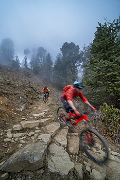 Mountain bikes descend through a misty forest in the Gosainkund region in the Himalayas, Langtang region, Nepal, Asia