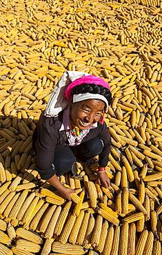 Drying maize (corn), on rooftops of traditional Tibetan houses at Jiaju Zangzhai, Sichuan Province, China, Asia