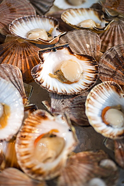 Scallops open in their shells at a fish stall in London's Borough Market, London, England, United Kingdom, Europe