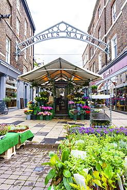 Shambles Market, York, North Yorkshire, England, United Kingdom, Europe - 1226-1025