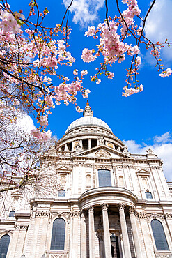 St. Paul's Cathedral with cherry blossom in springtime, London, United Kingdom - 1226-1052