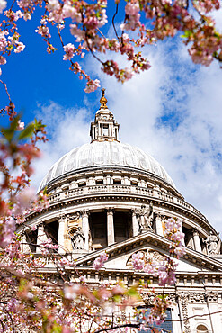 St. Paul's Cathedral with cherry blossom in springtime, London, United Kingdom