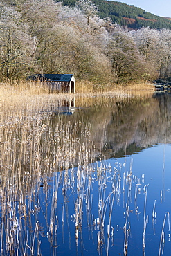 Loch Ard partially frozen over and a hoar frost around Aberfoyle in the Loch Lomond and the Trossachs National Park in mid-winter, Stirling District, Scotland, United Kingdom, Europe