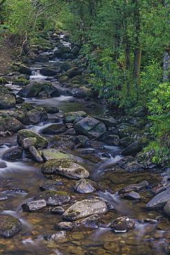 Owengarriff River, Killarney National Park, County Kerry, Munster, Republic of Ireland, Europe