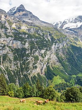 Swiss Alps, mountain scene, Switzerland, Europe