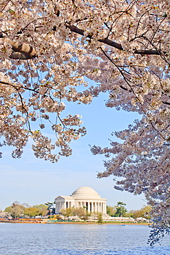 Cherry blossoms, Washington, DC, United States of America, North America