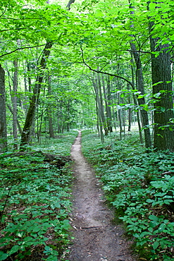 Forest trail, Sleeping Bear Dunes National Park, Glen Arbor, Michigan, United States of America, North America