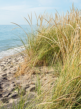 Sea grasses on a Lake Michigan beach, Sleeping Bear Dunes National Park, Glen Arbor, Michigan, United States of America, North America