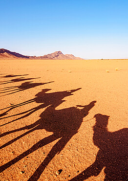 Shadows of people riding camels in a caravan at Zagora Desert, Draa-Tafilalet Region, Morocco, North Africa, Africa