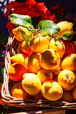 Fresh local basket of lemons in Manarola in Cinque Terre, province of La Spezia, in the Liguria region of Italy, Europe