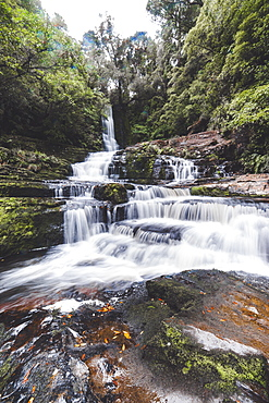 McLean Falls Walkway, Catlins Forest Park, South Island, New Zealand, Pacific - 1268-15