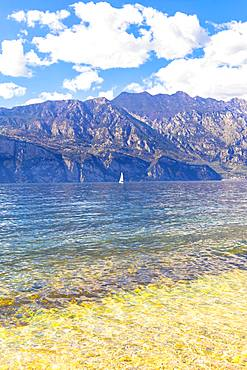 Sailboat on the lake, Malcesine, Lake Garda, Verona Province, Veneto, Italian Lakes, Italy, Europe