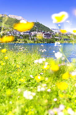 Summer flowers in Sankt Moritz (St. Moritz), Engadine, Graubunden, Switzerland, Europe