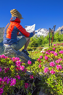 Tourist reading hiking map beside rhododendron flowers, Mount Scermendone, Valmasino, Valtellina, Lombardy, Italy, Europe