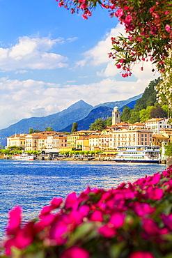 Flowers on the lake side of Bellagio, Province of Como, Lake Como, Italian Lakes, Lombardy, Italy, Europe