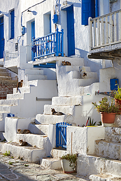 A bunch of cats hanging around in the old part of the Chora of Folegandros island