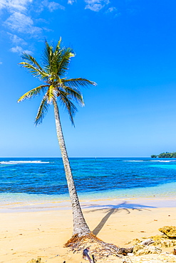 A view of a palm tree and the Caribbean sea off Bocas del Drago beach, Colon Island, Bocas del Toro Islands, Panama, Central America