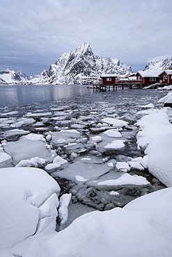 Traditional houses at Reine in winter, Moskenes, in the Lofoten Islands, Arctic, Norway, Europe