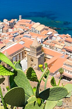 Prickly pear cactus (Opuntia ficus-indica) growing on La Rocca, high above the Old Town, Cefalu, Palermo, Sicily, Italy, Mediterranean, Europe