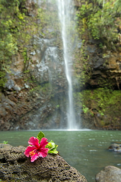 Flower on a rock in front of Uluwehi Falls, Kauai, Hawaii, United States of America, North America