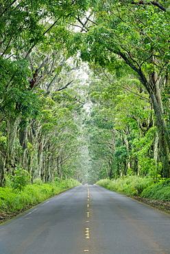 Tunnel of Trees, Kauai, Hawaii, United States of America, North America