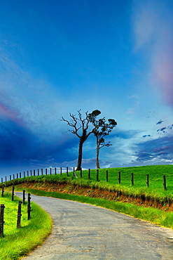 Landscape, Nuwara Eliya, Hill Country of the Central Province, Sri Lanka, Asia
