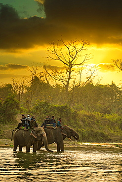 Tourist enjoying elephant safari in Chitwan National Park, Nepal, Asia