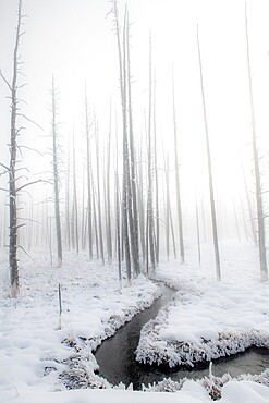 Snowscape with stream and trees in the fog, Yellowstone National Park, Wyoming, United States