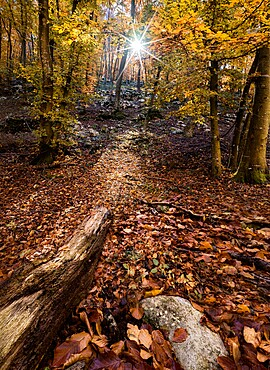 Autumn colors in a wood with a sun burst between the trees, Veneto, Italy, Europe