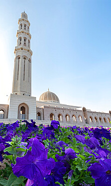 Sultan Qaboos Mosque minaret with violet petunia flowers in the foreground, Muscat, Oman, Middle East