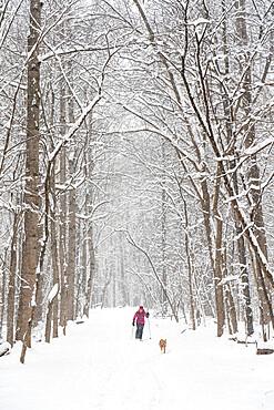 Jennifer Jordan and dog Jack cross country ski the Berma Road near Potomac, MD USA MR