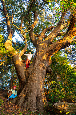 A woman and her son in the branches of one of the oldest Live Oaks in the Outer Banks of North Carolina, Nags Head, North Carolina, United States of America, North America