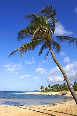 Poipu Beach Park with palm tree and swimming cove; Poipu, Kauai, Hawaii.