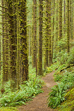 Siltcoos Lake Trail, Siuslaw National Forest, Oregon.