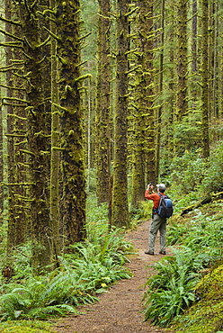 Hiker taking photo with cell phone on Siltcoos Lake Trail, Siuslaw National Forest, Oregon.