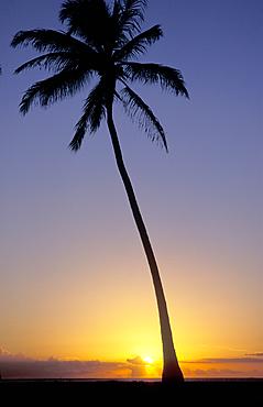 Coconut Palm tree silhouetted at sunset; Magic Island, Ala Moana Beach Park, Honolulu, Oahu, Hawaii.