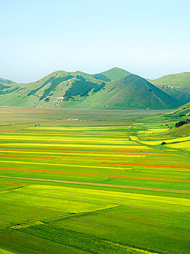 Lentil fields in Castelluccio di Norcia during the high season, Umbria, Italy, Europe