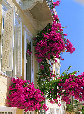 House with bougainvillea, Syros, Cyclades, Greek Islands, Greece, Europe