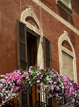 Petunias outside a window, Morcote, Lake Lugano, Ticino, Switzerland, Europe