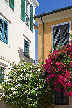 Hibiscus and bougainvillea growing in Corfu Old Town, Corfu, Ionian Islands, Greek Islands, Greece, Europe