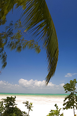 A palm branch above the beach, Michamvi Beach, Zanzibar, Tanzania, East Africa, Africa